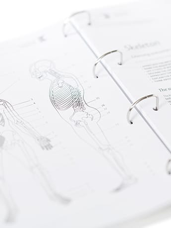 Anatomy & Physiology course pages