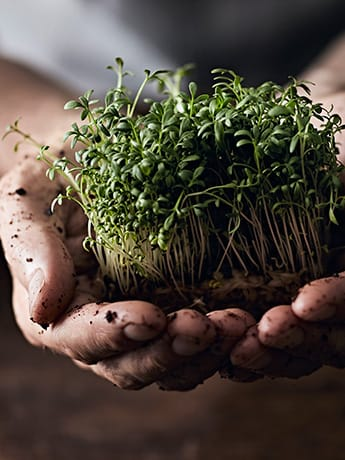 Nutrition for beginners cress in muddy hands