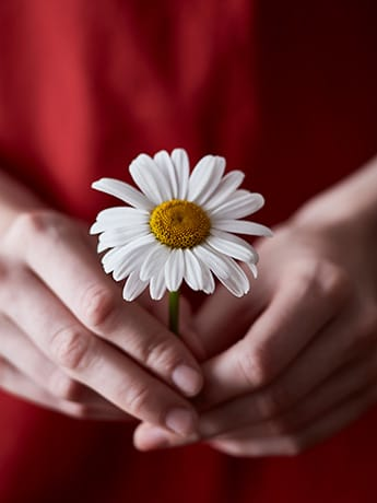 Daisy in hands LR