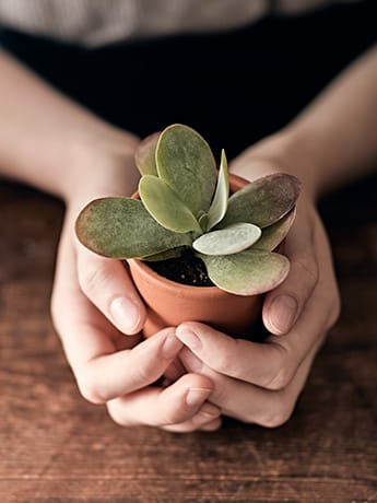 Plant in two hands