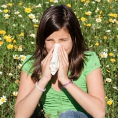 Reduce hayfever misery through diet